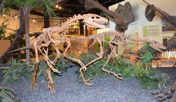 Dromaeosaurus display, Rocky Mountain Dinosaur Resource Center, Woodland Park, CO.