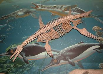 Terrific fossil of the plesiosaur Dolichorhynchops. Smithsonian National Museum of Natural History, Washington, DC.