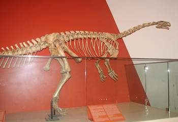 Massospondylus display, Royal Ontario Museum, Toronto, ON.