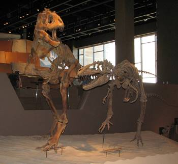 Teratophoneus display, Natural History Museum of Utah, Salt Lake City, UT.