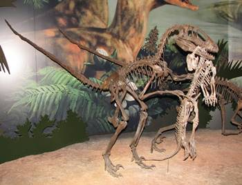 Deinonychus holding a victim, a young Tenontosaurus. Sam Noble Oklahoma Museum of Natural History, Norman, OK.