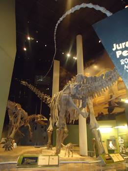 Natural History Museum Norman Ok