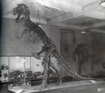 The original Tyrannosaurus mount at the American Museum of Natural History, New York, NY.