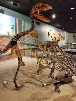 Deinonychus attacking a Tenontosaurus. Academy of Natural Sciences of Drexel University, Philadelphia, PA.