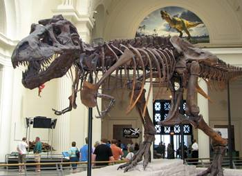 """Sue,"" the most famous dinosaur in the world, on display at the Field Museum in Chicago, IL."