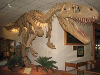 Fantastic Torvosaurus mount at the B.Y.U. Museum of Paleontology, Brigham Young University, Provo, UT.