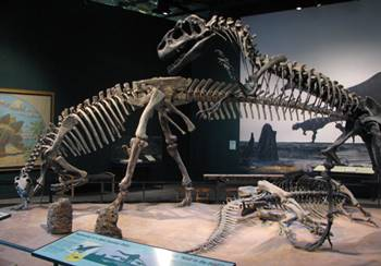 Allosaurus stalking Camptosaurus at the Science Museum of Minnesota, St. Paul, MN.