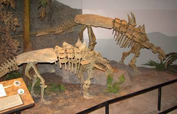 A pair of Gastonia muching on vegetation at the Museum of Ancient Life, Lehi, UT.