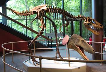 Cleveland museum of natural history cleveland oh Dinosaur museum ohio
