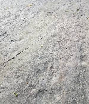 Several dinosaur pathways visible at Dinosaur Footprints Reservation, Holyoke, MA.