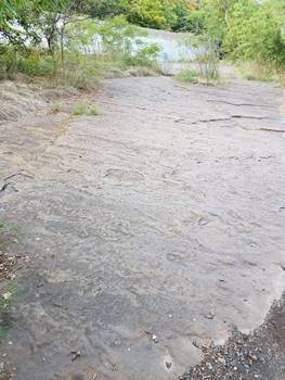 A large portion of the trackway, with the river behind. Dinosaur Footprints Reservation, Holyoke, MA.