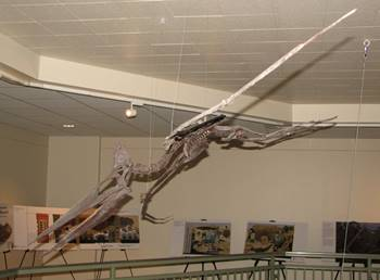 "Fossil Pteranodon ""flying"" over the display area at the University of Wyoming Geological Museum, Laramie, WY."