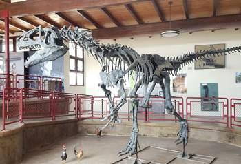 A beautiful Allosaurus mount in the Visitor Center at the Cleveland-Lloyd Dinosaur Quarry, near Cleveland, UT.