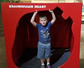 My son is shocked at the size of a Brachiosaurus heart. Dinosaur Journey Museum of Western Colorado, Fruita, CO.