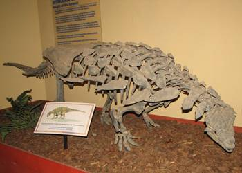 The ankylosaur Mymoorapelta at the Dinosaur Journey Museum of Western Colorado, Fruita, CO.