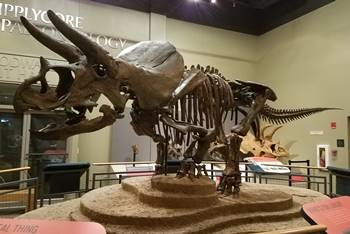 """Homer"" the Triceratops on display at the Burpee Museum of Natural History, Rockford, IL."
