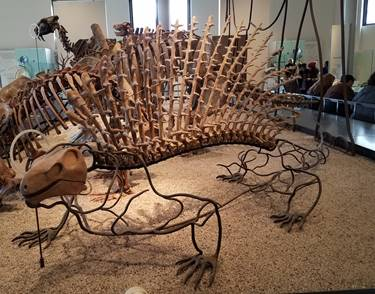 Edaphosaurus display at the American Museum of Natural History, New York, NY. Photo credit: John Gnida.
