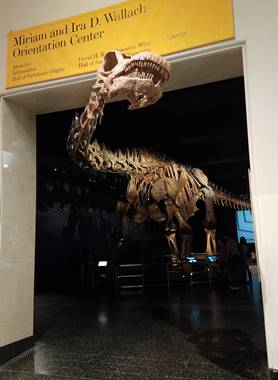 Beautiful cast of the titanosaur Patagotitan on display at the American Museum of Natural History, New York, NY. Photo credit: John Gnida.