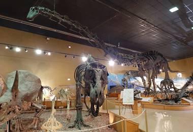 """Jimbo"" the Supersaurus among the many dinosaurs on display at the Wyoming Dinosaur Center, Thermpopolis, WY. Photo credit: John Gnida."