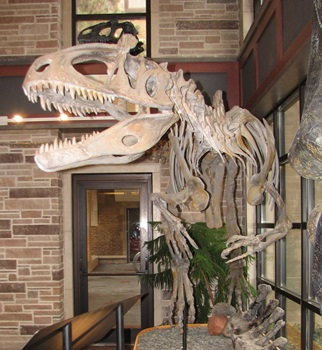 Cryolophosaurus at the Fryxell Geology Museum, Augustana College, Rock Island, IL. Photo credit: John Gnida.