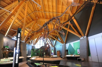 Interior, Philip J. Currie Dinosaur Museum, Wembley, Alberta. Photo credit: Philip J. Currie Dinosaur Museum.