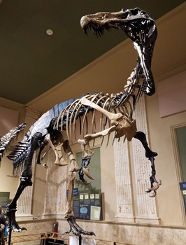 Suchomimus at the Dinosaur Discovery Museum, Kenosha, WI. Photo credit: John Gnida.