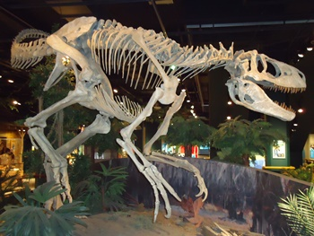 Appalachiasaurus, the only known tyrannosaur from the eastern United States. It is thought that the animal had two fingers like most of its tyrannosaur relatives. McWane Science Center, Birmingham, AL. Photo credit: John Gnida.