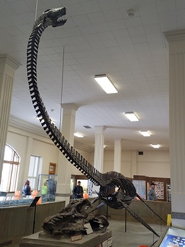 Terrific Styxosaurus mount at the South Dakota School of Mines Museum of Geology, Rapid City, SD. Photo credit: John Gnida.
