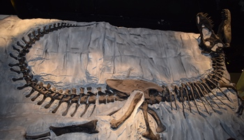 """Black Beauty"" at the Royal Tyrrell Museum, Drumheller, Alberta, Canada. Photo credit: John Gnida."