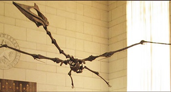 Hanging from the Great Hall is the giant Texas pterosaur Quetzalcoatlus. Texas Memorial Museum, Austin, TX. Photo credit: Texas Memorial Museum.