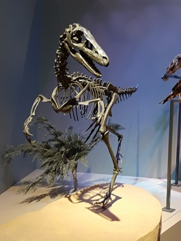 Troodon on display at the Perot Museum of Nature and Science, Dallas, TX. Photo credit: John Gnida.